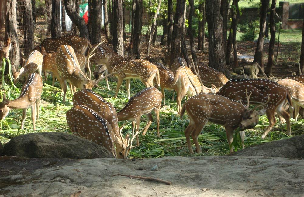Malsi Deer Park, Dehradun
