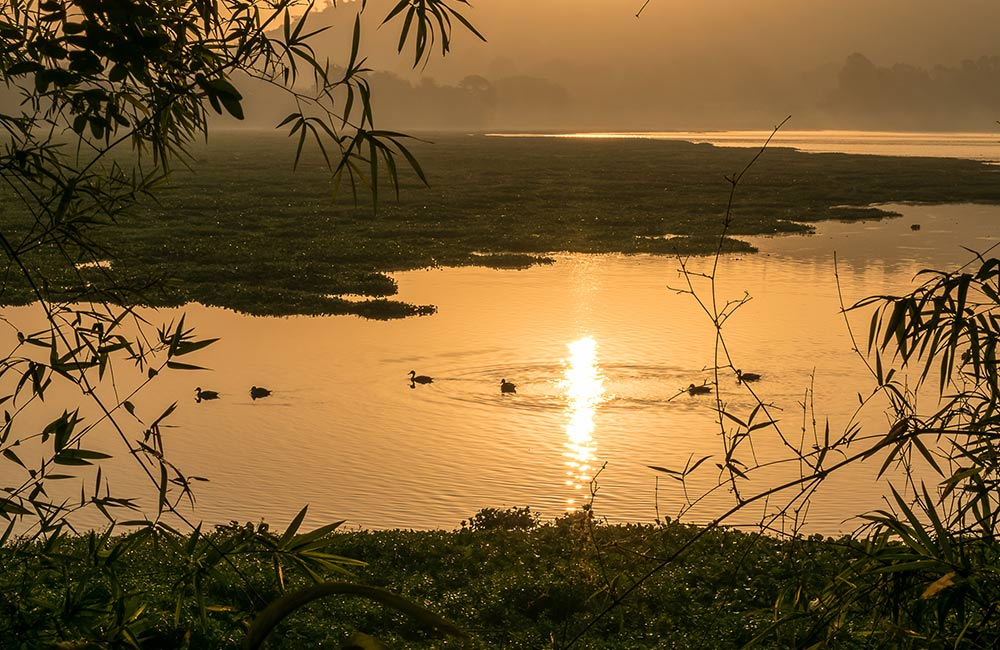 Pashan Lake, Pune