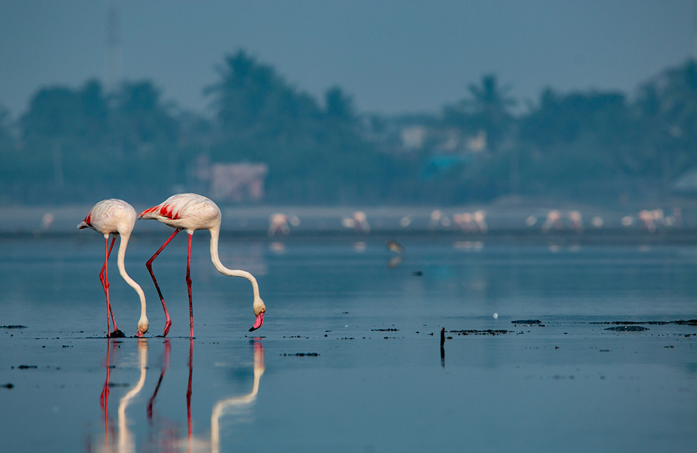 Pulicat Lake, Chennai