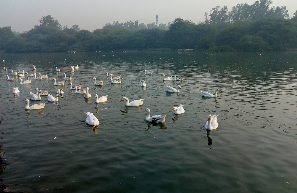 Sanjay Lake, New Delhi