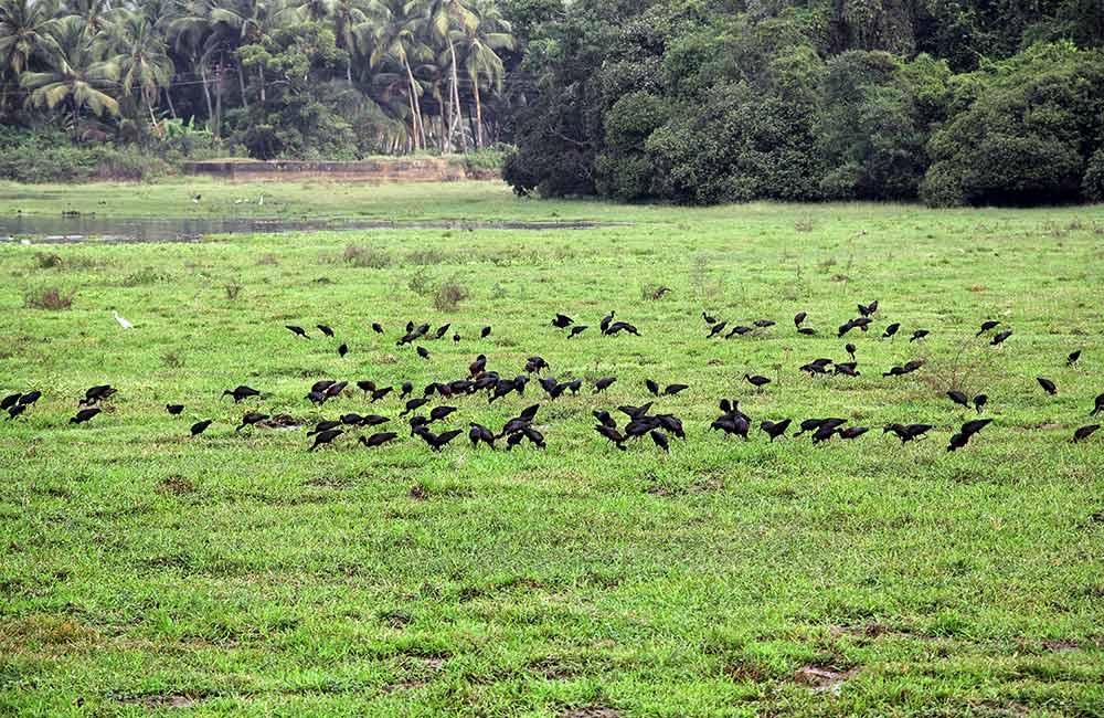 Batim Lake, Goa