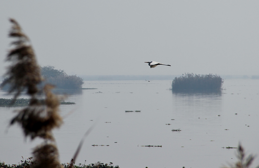 Harike Wetlands and Bird Sanctuary