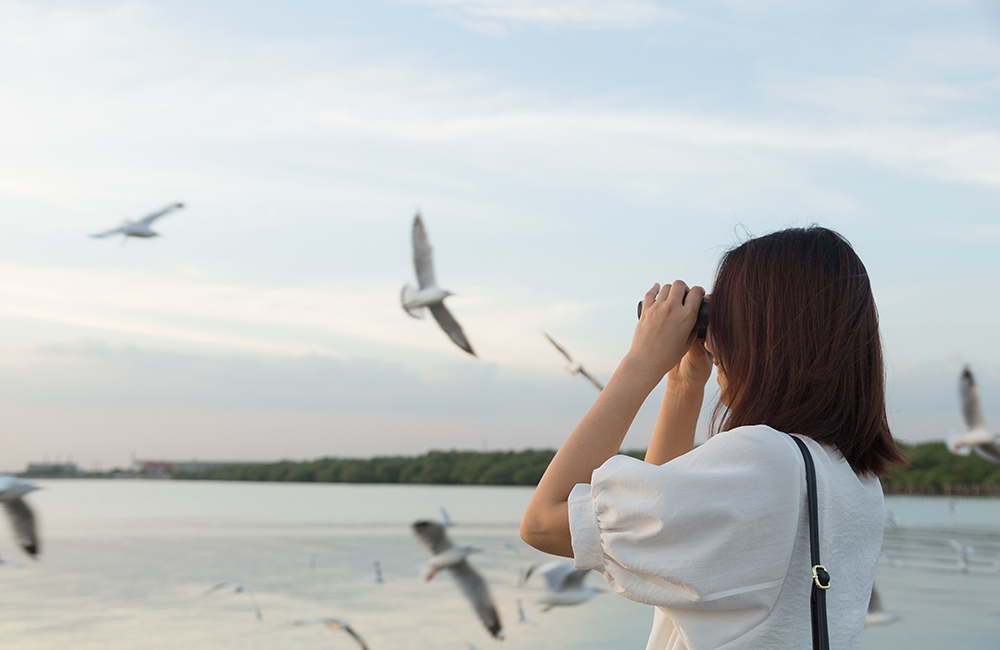 Nellapattu Bird Sanctuary