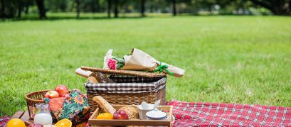 Top 7 Picnic Spots in Chandigarh