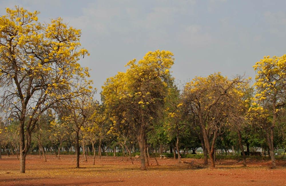 Sanjeevaiah Park, Hyderabad