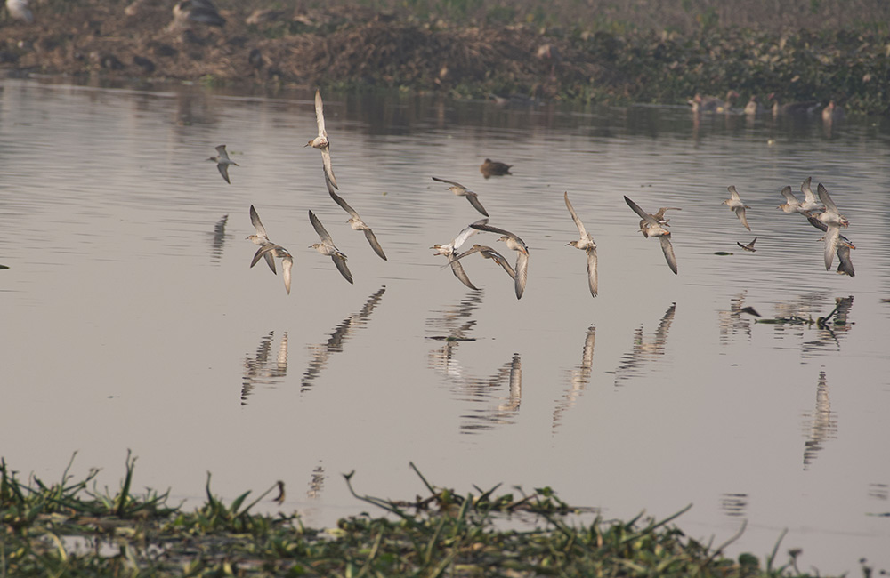 Surajpur Bird Sanctuary, Noida