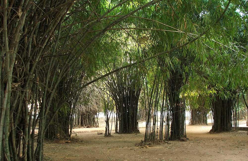 Venuvan Vihar, Rajgir