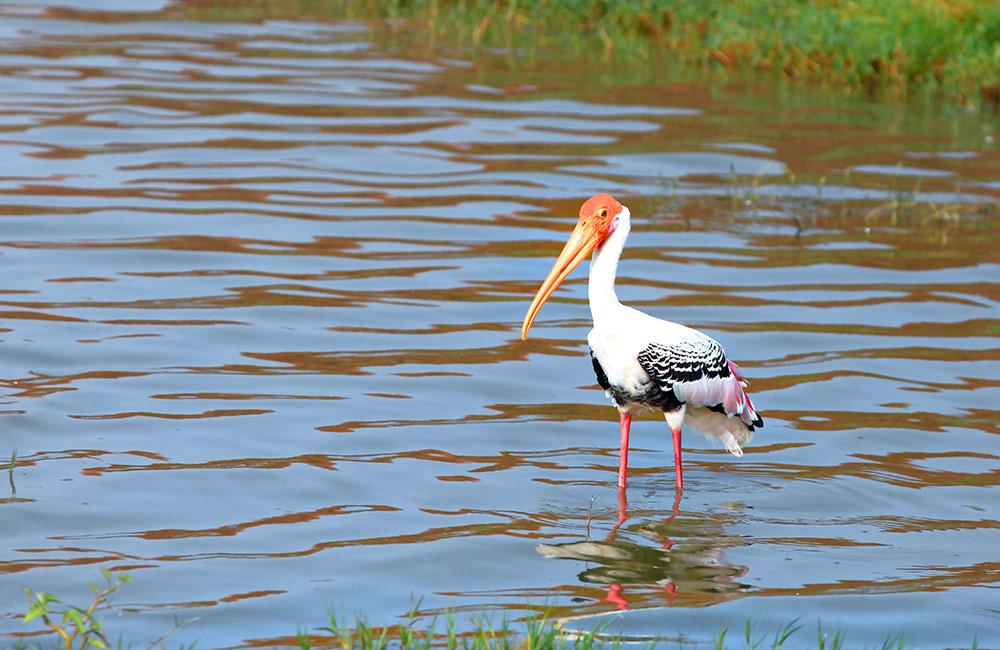 CITM Lake, Faridabad