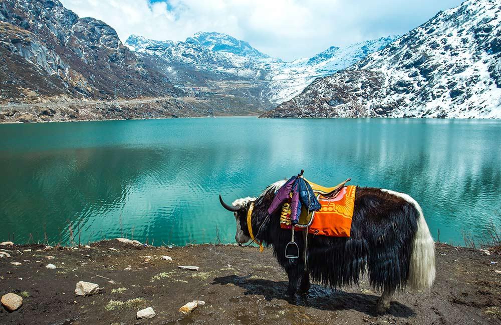Tsomgo Lake, Gangtok