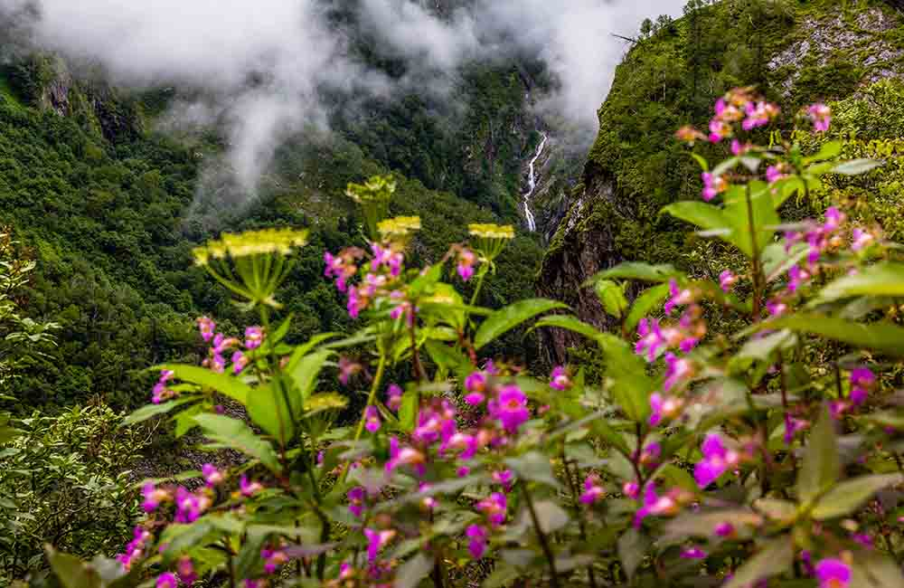 Valley of Flowers | Best Places to Visit in June