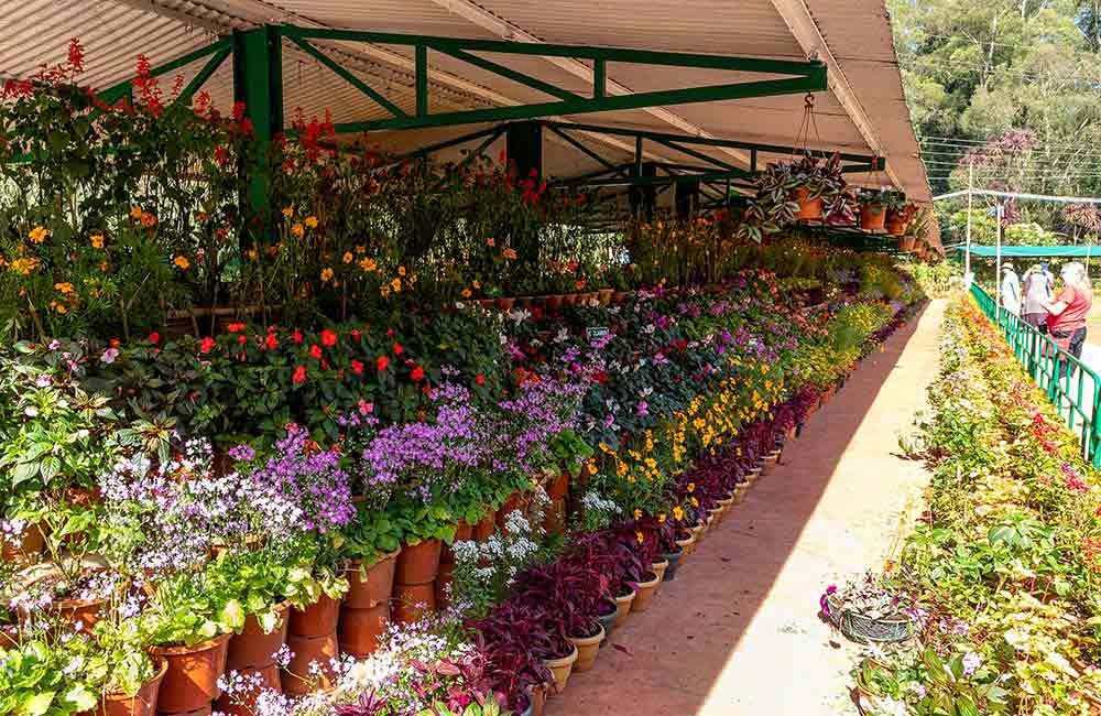 Government Botanical Garden | 2 days Itinerary Ooty