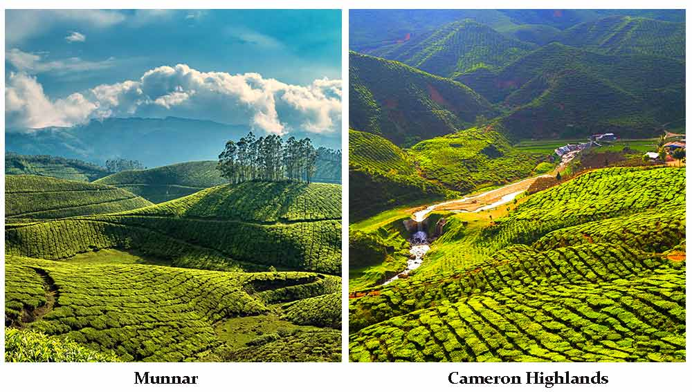 Munnar-Cameron-Highlands1